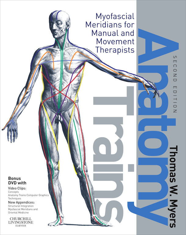 Funky Yoga Anatomy Dvd Vignette Anatomy And Physiology Biology